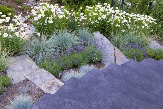 Wcd ornamental grasses mightylinksfo